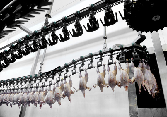 Food and Carcass Antimicrobials